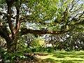 HI Oahu Queen Emma Summer P3.jpg