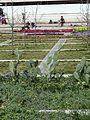 Habima (HaTarbut) Square P1130869.JPG