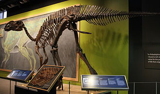 Hadrosaurus - Reconstructed skeleton, Academy of Natural Sciences