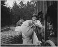 "Harmony Community, Putnam County, Georgia.... A ""Briar Patch"" farmer unloading purchased grain at hi . . . - NARA - 521442.tif"