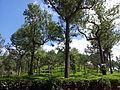 Harrison Malayalam Tea Garden Munnar 114707.jpg