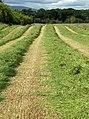 Hay-meadow, Coldoch - geograph.org.uk - 192729.jpg