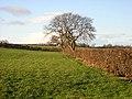 Hedge and Trees Near Treeswoodhead Road - geograph.org.uk - 292515.jpg