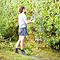 Hedge clipping.jpg