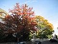 Herbstbäume in der Appelstraße - panoramio.jpg