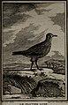 Histoire naturelle des oiseaux (1781) (14564579578).jpg