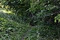 Horianivka Kivertsivskyi Volynska-Horianivski sources nature monument-first separate source-2.jpg