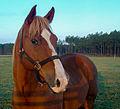 Horse 1 (18584624130).jpg