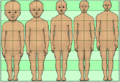 Human development neoteny body and head proportions pedomorphy maturation aging growth.png