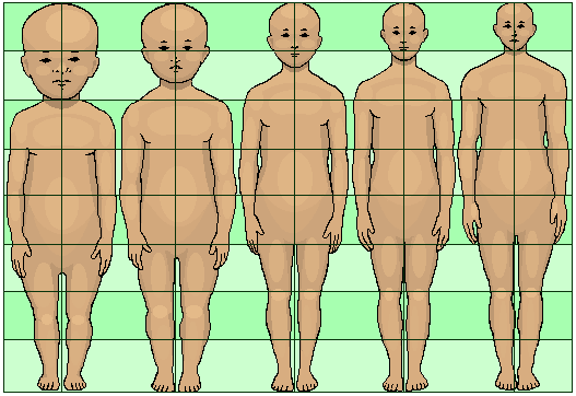 Human development neoteny body and head proportions pedomorphy maturation aging growth