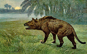 alt=Description de l'image Hyaenodon Heinrich Harder.jpeg.