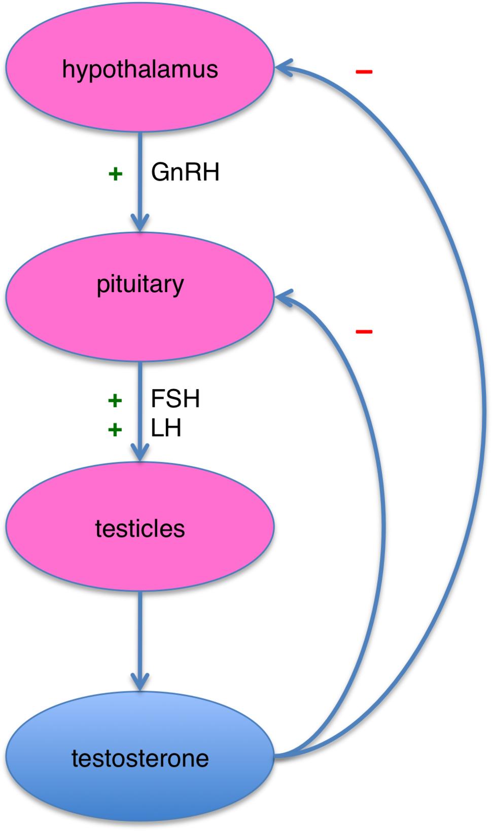 male-sex-hormones-include-high-levels-of-swingers-black-fuck