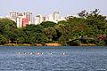 Ibirapuera 25.jpg