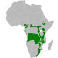 Iduna natalensis distribution map.png