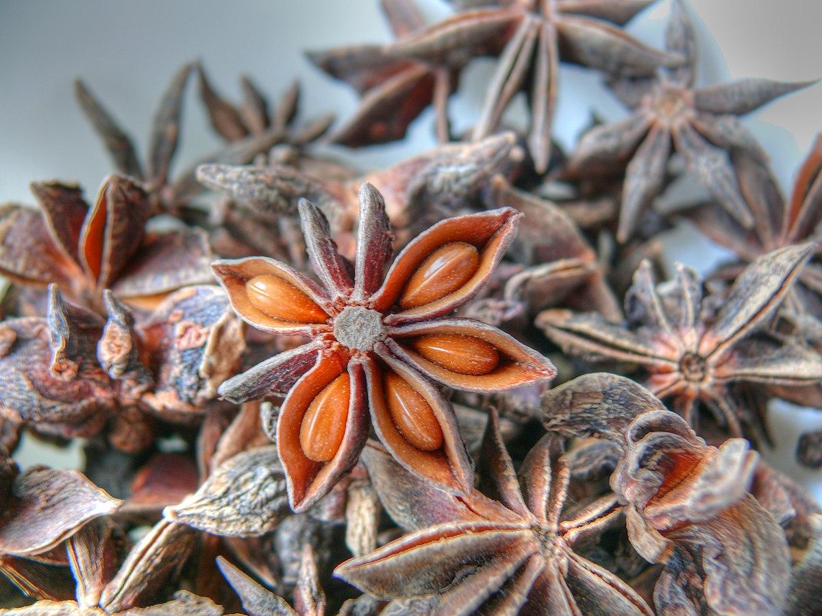 Illiciaceae in Flora of North America @ efloras.org