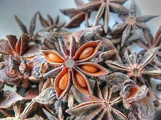 Illicium - fruits of star anise (Illicium verum)