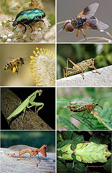 Insects collage smaller.jpg