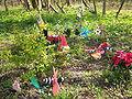 Ipswich murders memorial.jpg