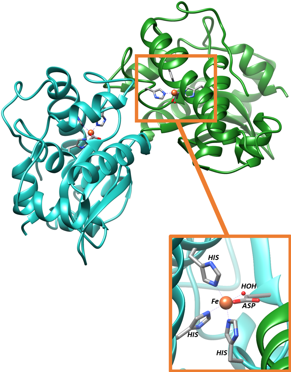 Iron Superoxide Dismutase Active Site