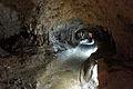 Ishigaki-Cave13s5s4592.jpg