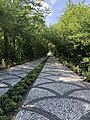 Istanbul Technical University walkway with trees.jpg