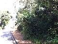 Itupeva - panoramio (211).jpg