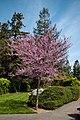 Japanese Friendship Garden (4526445571).jpg