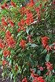 Jardim Botânico da Madeira DSC 0183 (14677061966).jpg