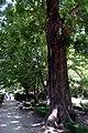 Jardin Botanico (19) (9376546853).jpg