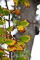 Jardin Japonais, Toulouse (8103243714).jpg