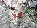 Jasper pebbles in quartzite (Lorrain Formation, Paleoproterozoic, ~2.3 Ga; Ottertail Lake Northeast roadcut, near Bruce Mines, Ontario, Canada) 12 (47655954332).jpg
