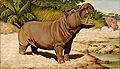 Jean Bungartz Hippopotamus.jpg