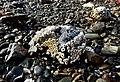 Jedway Bay (28722872552).jpg