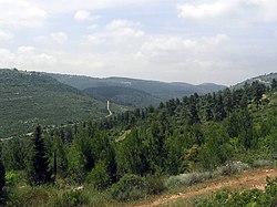 נוף אופייני בהרי יהודה