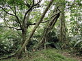 Jhihben National Forest Recreation Area 03.jpg