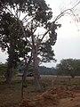 Juara - State of Mato Grosso, Brazil - panoramio - LUIS BELO (32).jpg