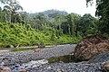 Jungle River (11888308085).jpg