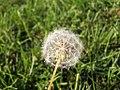 Just a Flower... (43212397).jpg