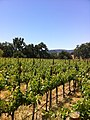 Justin Vineyards in Paso Robles.jpg