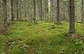 Jyväskylä - forest in Huhtasuo.jpg