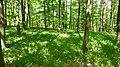 KONVALINKOVO - panoramio.jpg