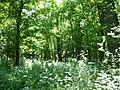Karapancsai erdő.jpg