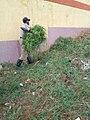 Kenyan farmer.jpg
