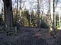 Knighton's Hill Wood - geograph.org.uk - 770531.jpg