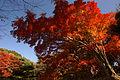 Kobe Suma Rikyu Park15n4592.jpg