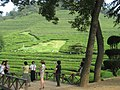 Korea-Boseong-Green.tea-05.jpg