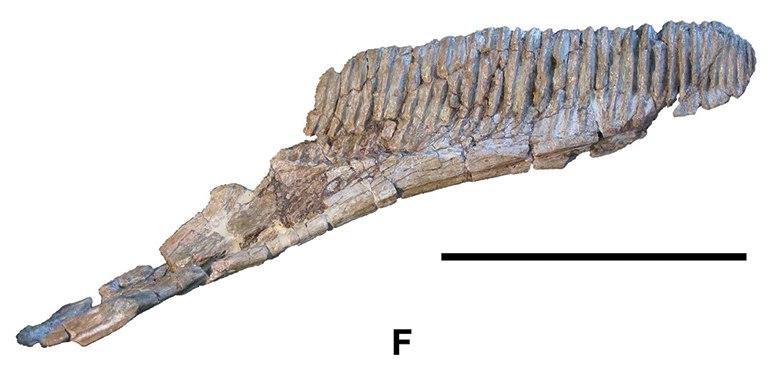Koutalisaurus