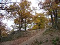 Kunratický les, suťový les pod Novým Hrádkem (01).jpg