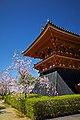 Kyoto, 桜, sakura, Ninnajii - Cherry blossoms 2015 - panoramio.jpg