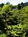 Kyoto 0456.jpg